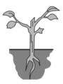 Las plantas.png