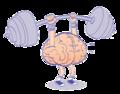 Cerebro levanta pesas - ExE lectura.png