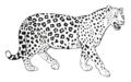 El jaguar.png